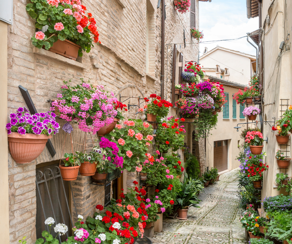 Windows and doors filled with colorful flowers in Spello